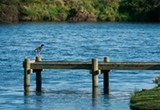 Little Lake Cottage - Jetty with Bird
